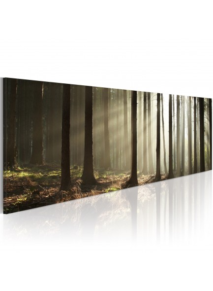 Foto schilderij - Canvas print - Morning in the woods