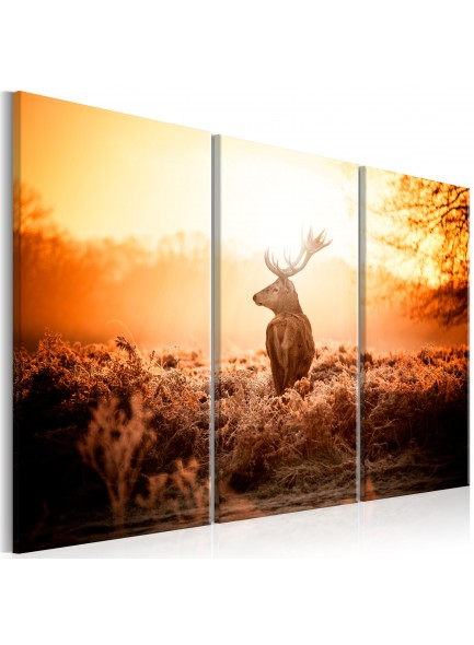 Foto schilderij - Deer in the Sun I