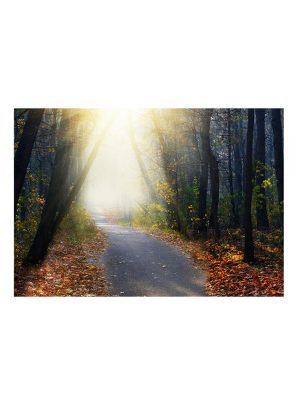 Fotobehang - Road through the Forest